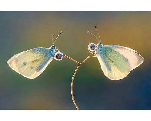 Mariposas-foto-de-petar-sabol