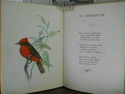 Churrinche-burghi