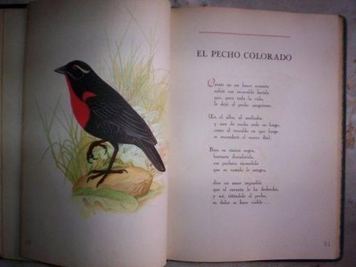 Pecho-colorado-burghi