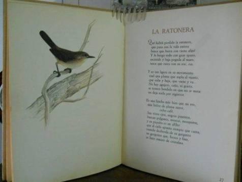 Ratonera-burghi