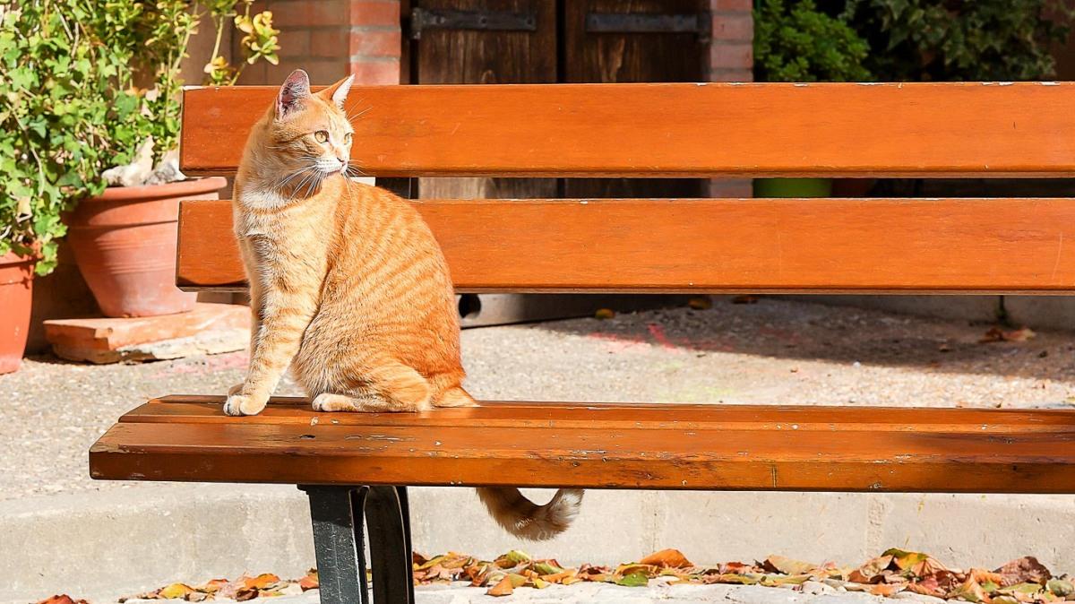 El gato sentado sobre elbanco