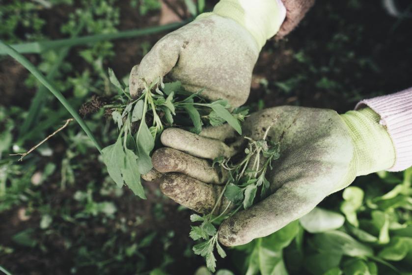 La imagen tiene un atributo ALT vacío; su nombre de archivo es gardening-2518377_1920.jpg
